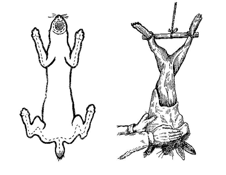 Снятие шкурки кролика