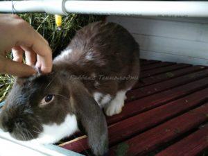 Кролиководство и продовольственная безопасность