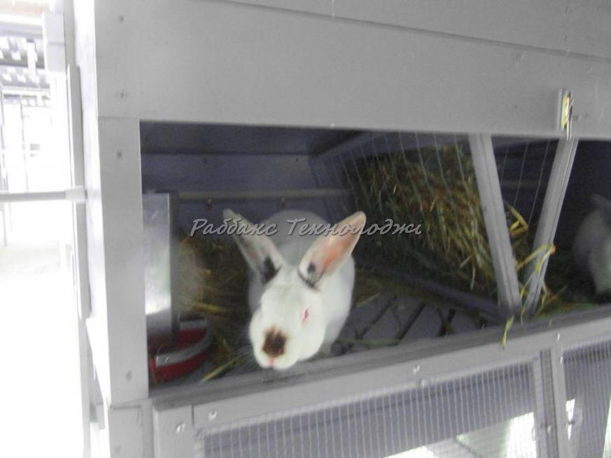 Корма, кормление кроликов