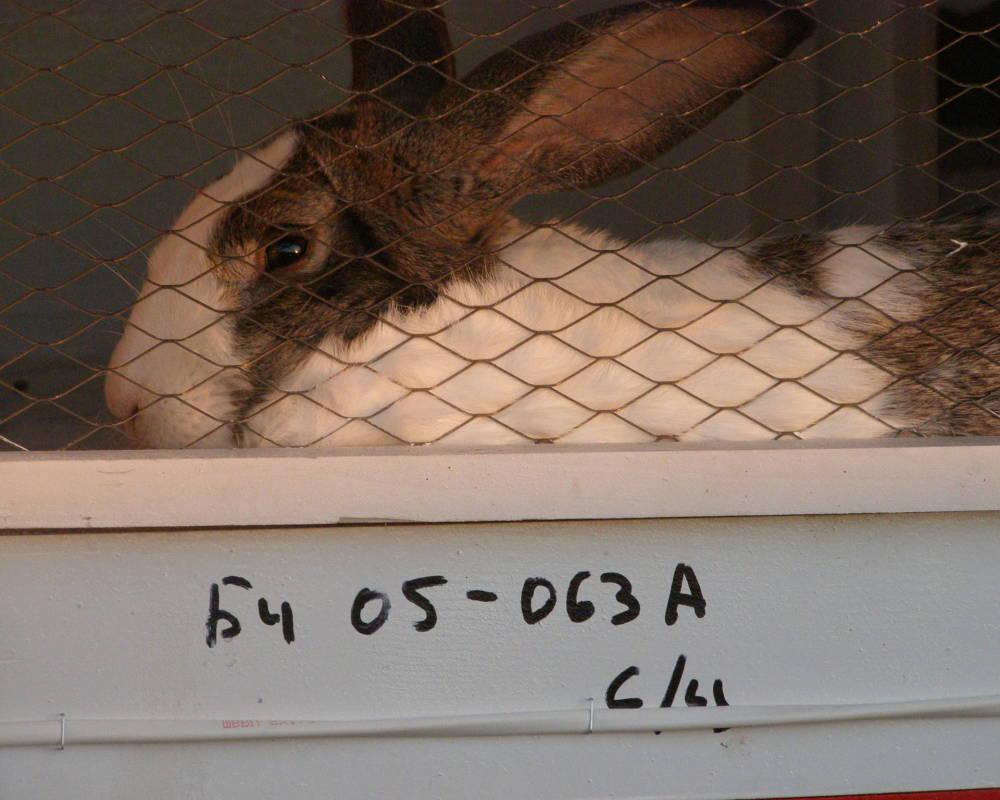 Зоотехнический учет на кролиководческой ферме