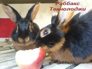 Кролики бизнес