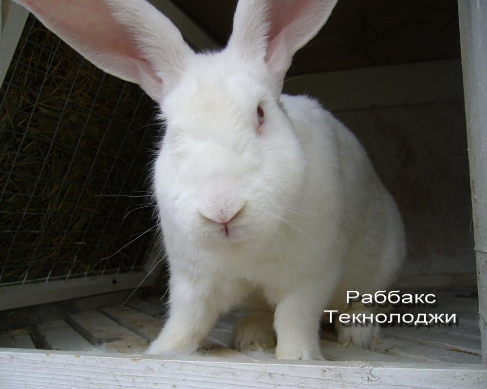 Бонитировка кролей различных пород