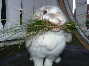 Кролиководство | Корма и кормление
