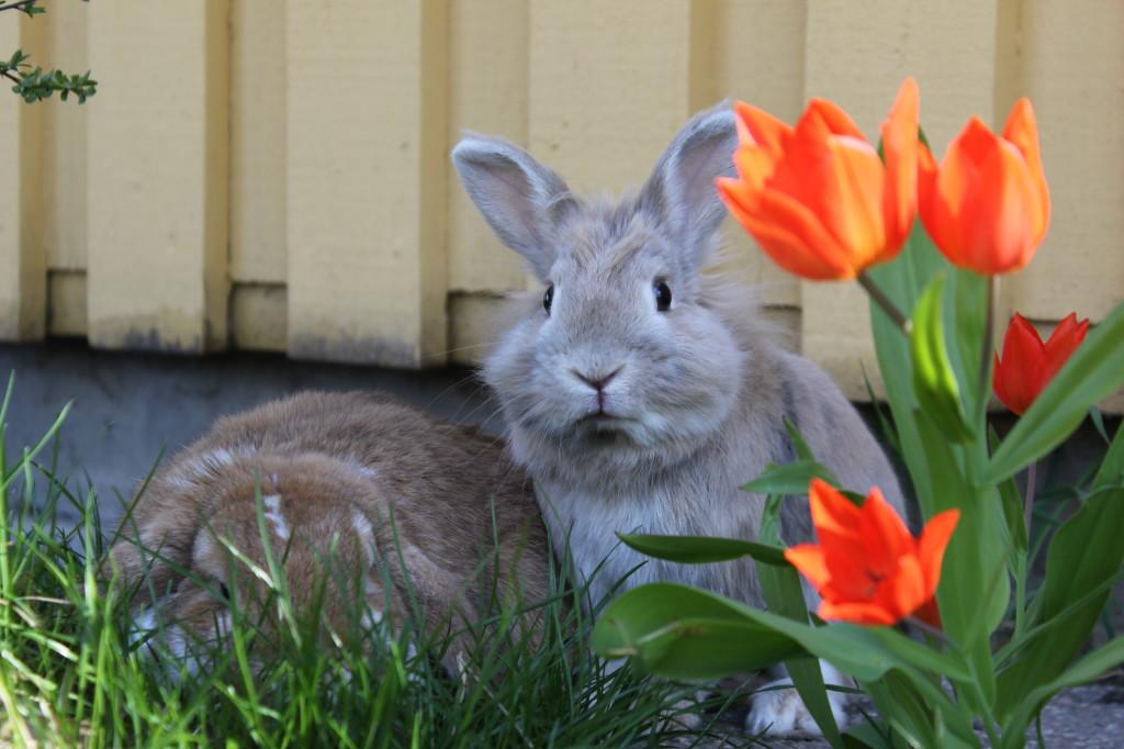 Как прибыльно разводить кроликов