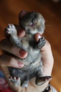 Кролик Лапик