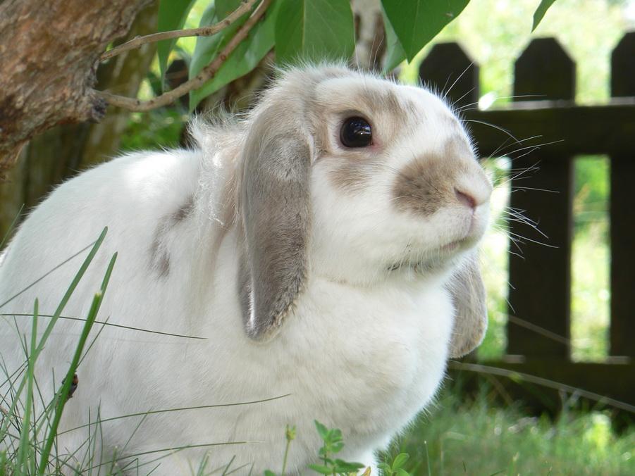 Биохимия кролика
