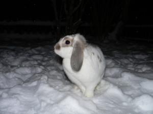 Kaninchenzucht in Deutschland